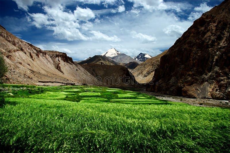 De gebieden van Himalayan stock afbeelding