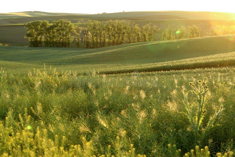 De gebieden van Moravian royalty-vrije stock foto