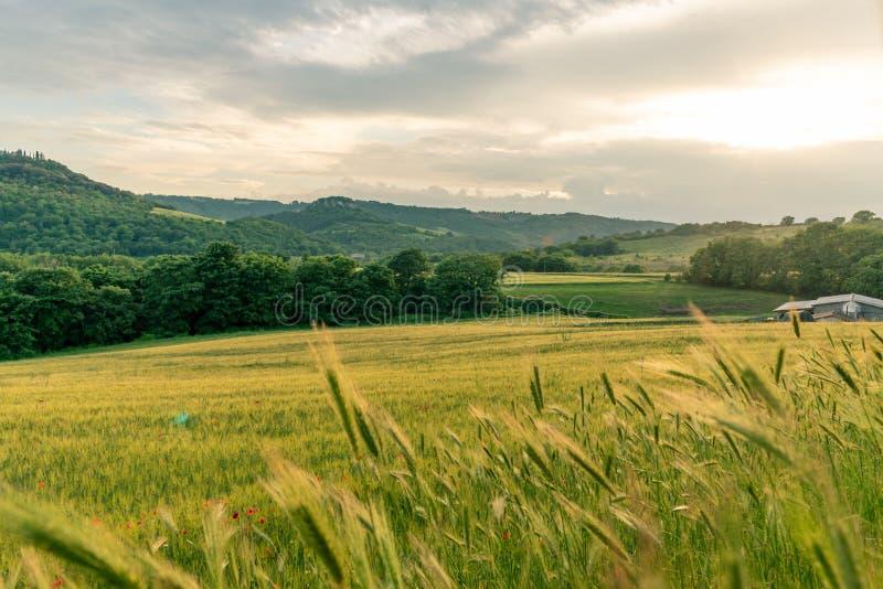 De gebieden vulden met tarwe en heuvels in het platteland, in de avond bij zonsondergang aan het begin van de zomer in Umbria Ita royalty-vrije stock foto's