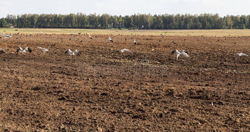 De gebiedsherfst Republik van Wit-Rusland royalty-vrije stock afbeeldingen