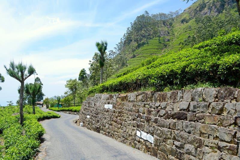 De gebogen aanplantingen van de de trogthee van de asfaltweg in Sri Lanka stock fotografie