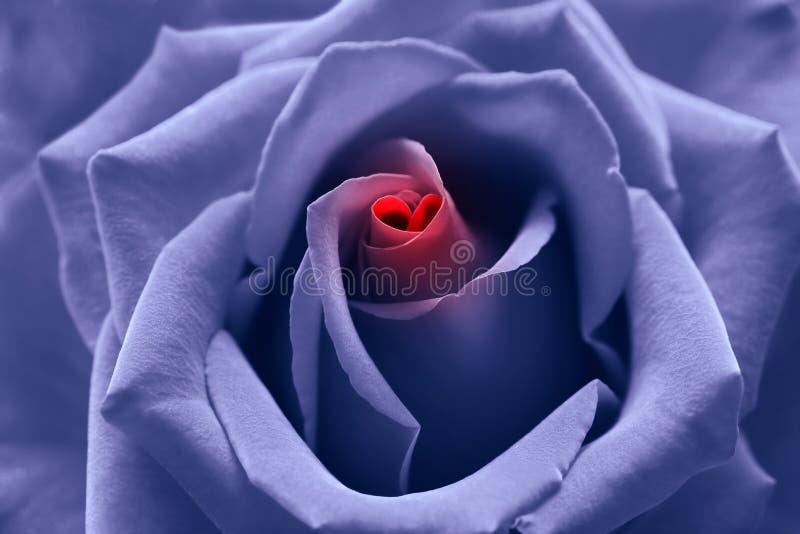 De geboorte van de liefde: gestemd blauw nam met hartsymbool toe royalty-vrije stock afbeelding
