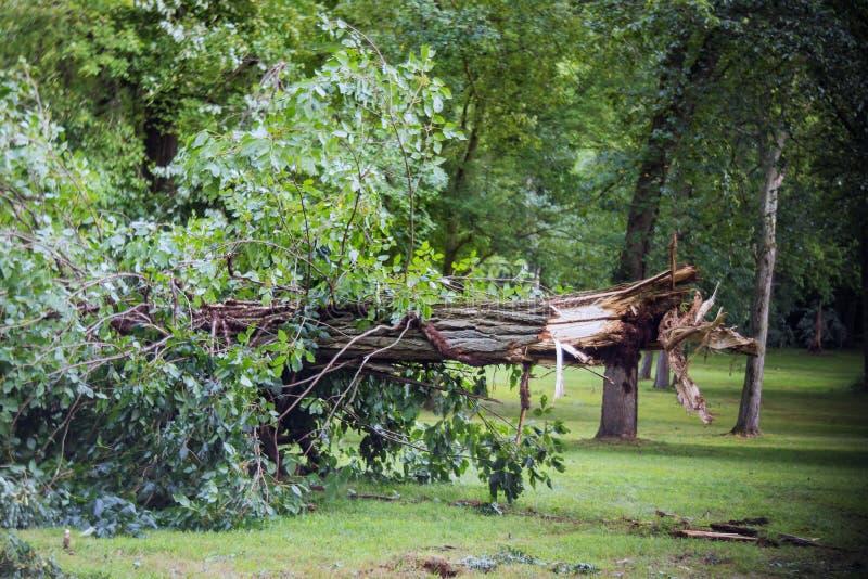 De gebroken bomen na krachtige orkaan in het bos na een onweer stock foto