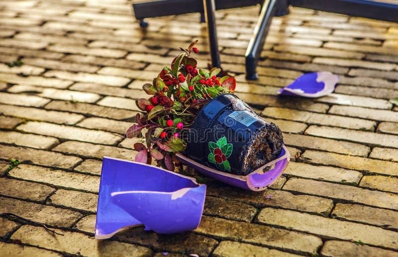 De gebroken foto van het bloempotclose-up stock afbeeldingen