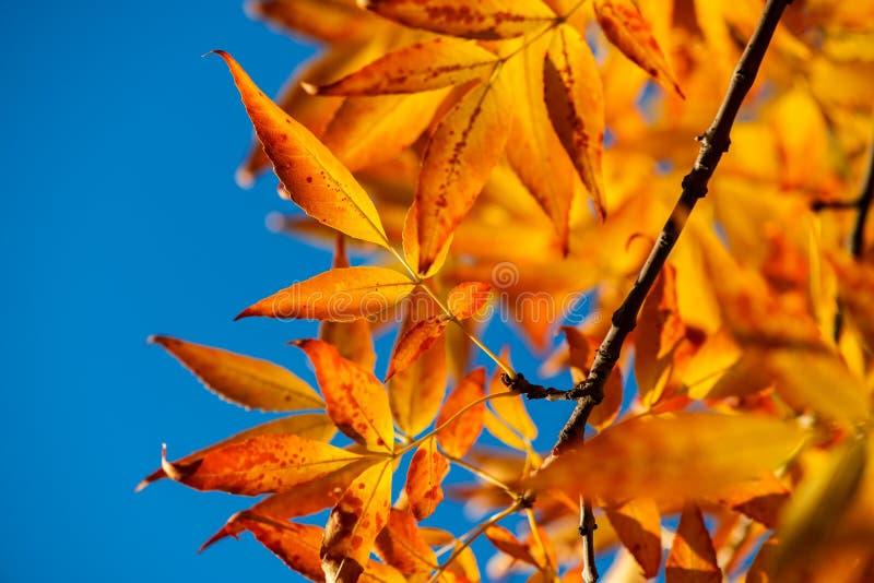 De geeloranje rode bladeren van Nice op blauwe hemelaard stock foto's
