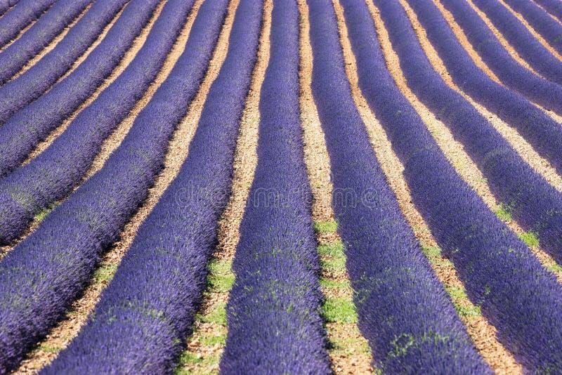 De geest van de Provence royalty-vrije stock foto
