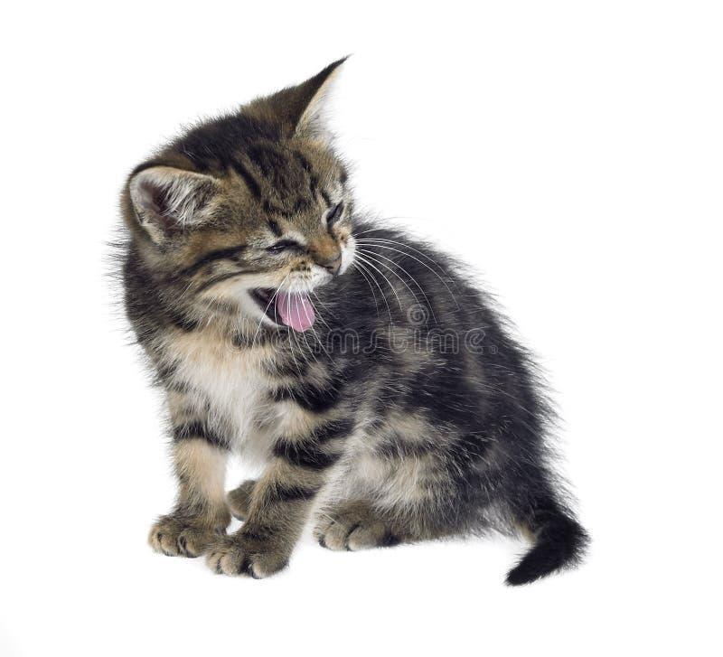 De geeuw van het katje stock fotografie