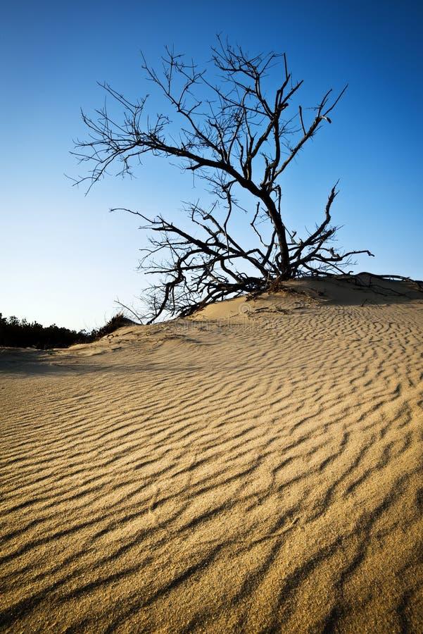 De gegolfte BuitenBanken NC van de Rand van Jockeys van de Duinen van het Zand stock foto