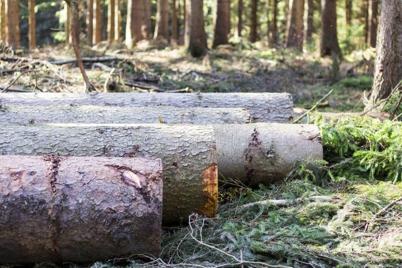 De gehakte bomen leggen op een rij stock afbeeldingen