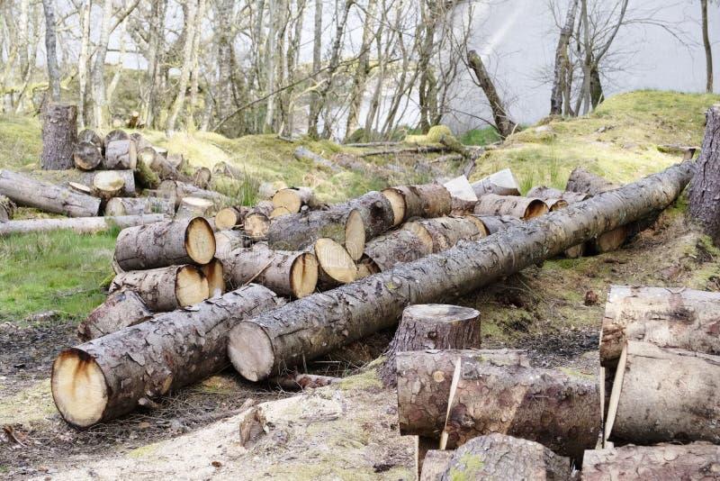 De gehakte houten die logboeken voor verkoop gebruiken in brandplaats thuis op de bosenergie van de hout groene biomassa wordt op royalty-vrije stock afbeeldingen