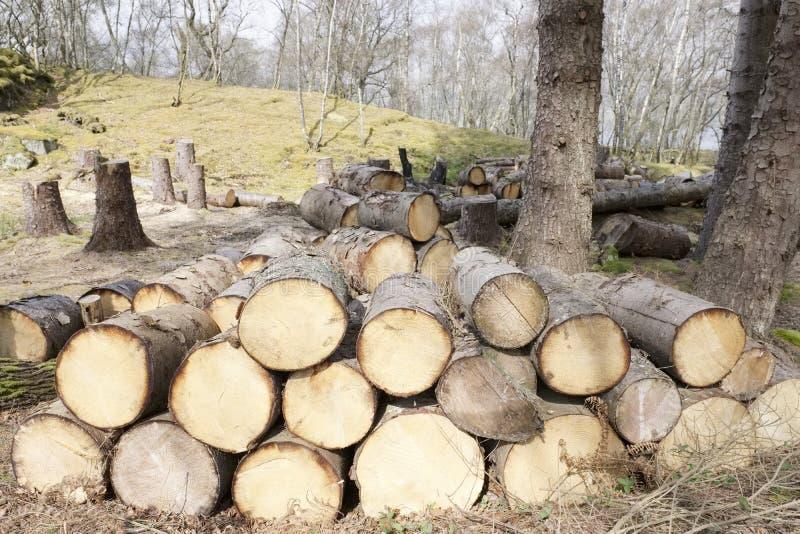 De gehakte houten die logboeken voor verkoop gebruiken in brandplaats thuis op de bosenergie van de hout groene biomassa wordt op stock fotografie