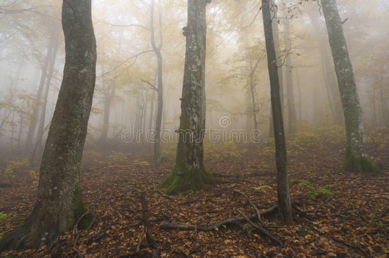 De geheimzinnige herfst stock afbeeldingen