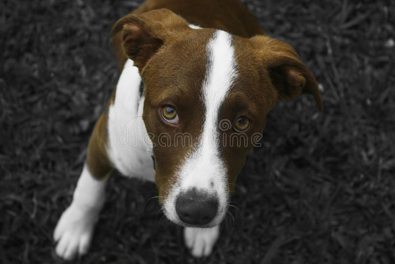 De Geheimzinnige Hond royalty-vrije stock foto's