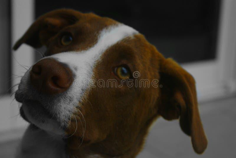 De Geheimzinnige Hond stock foto's