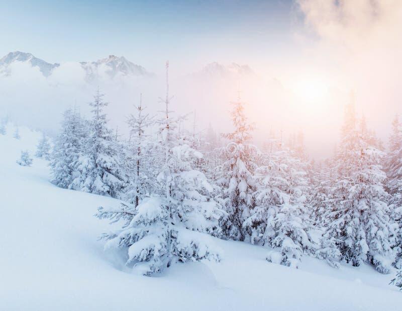 De geheimzinnige majestueuze bergen van het de winterlandschap in de winter Magische de wintersneeuw behandelde boom Dramatische  royalty-vrije stock foto