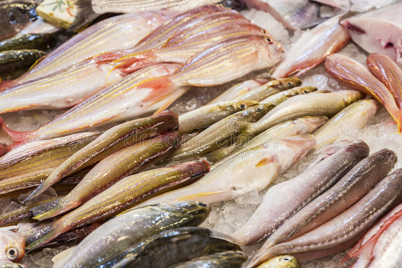 De gehele verse vissen worden aangeboden in de vissenmarkt royalty-vrije stock afbeelding
