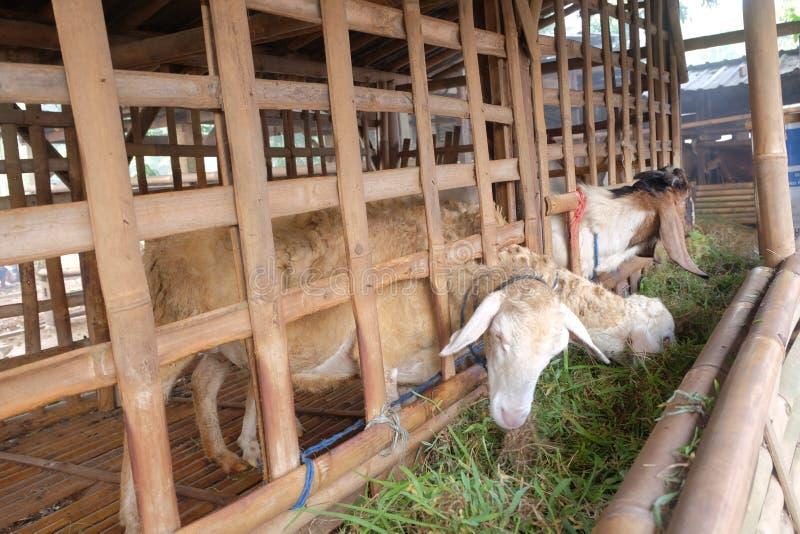 De geiten eten gras in de kooi stock fotografie