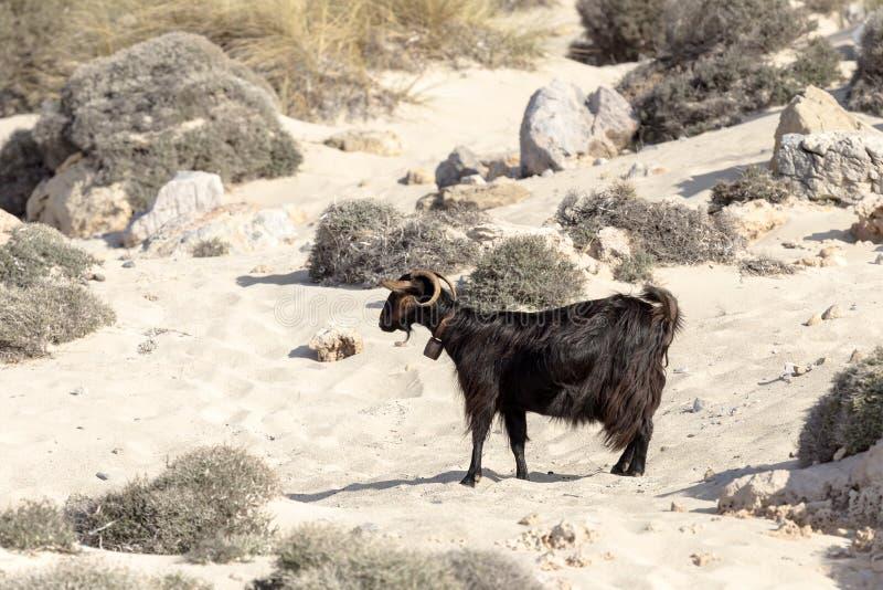 De geiten weiden in de bergen royalty-vrije stock fotografie