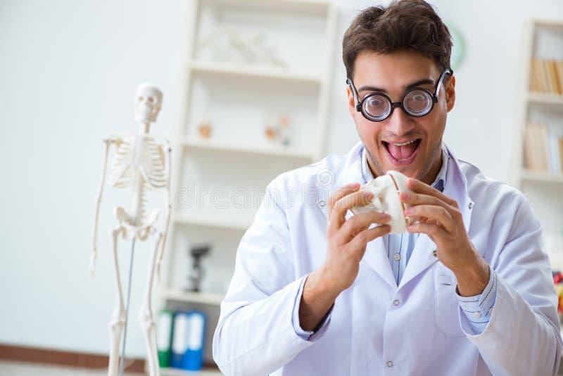 De gekke arts die menselijk skelet bestuderen royalty-vrije stock foto's