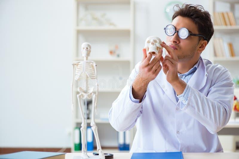 De gekke arts die menselijk skelet bestuderen stock foto's