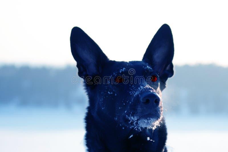 de gekke hond bekijkt iets stock fotografie