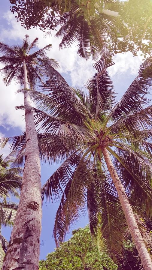 De gekke zomer vibes in Filippijnen stock foto