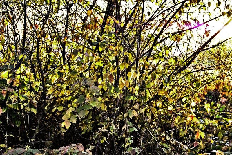 De gekleurde herfst stock foto's