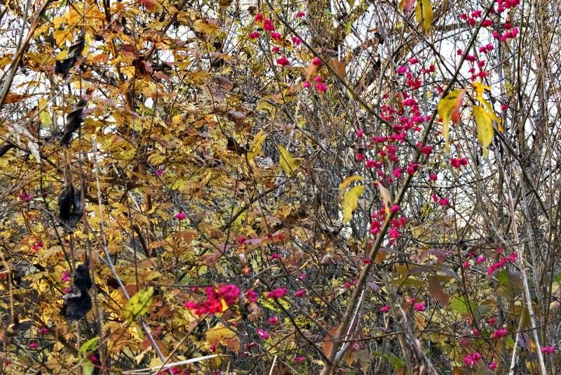 De gekleurde herfst royalty-vrije stock afbeelding