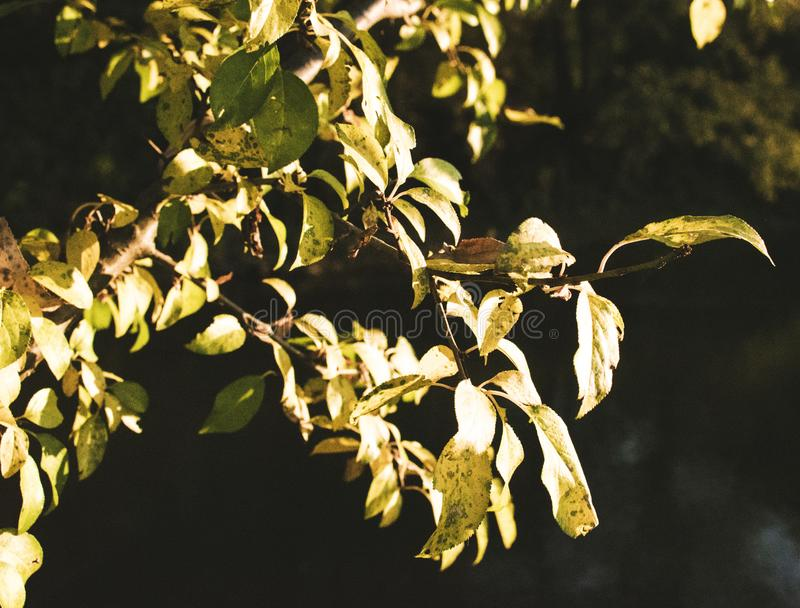 De gekleurde herfst stock afbeelding