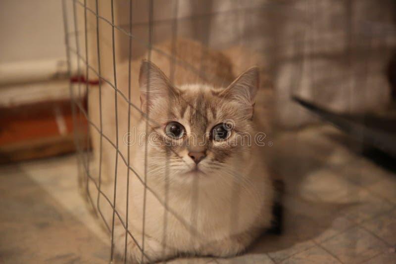 De gekleurde kat van Neva Masquerade seames tabbi behaind het net in een kooi royalty-vrije stock foto