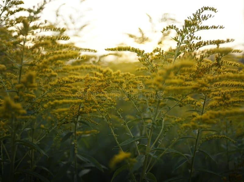 de gele achtergrond van de de bloesemtuin van het bloemclose-up bokeh royalty-vrije stock afbeelding