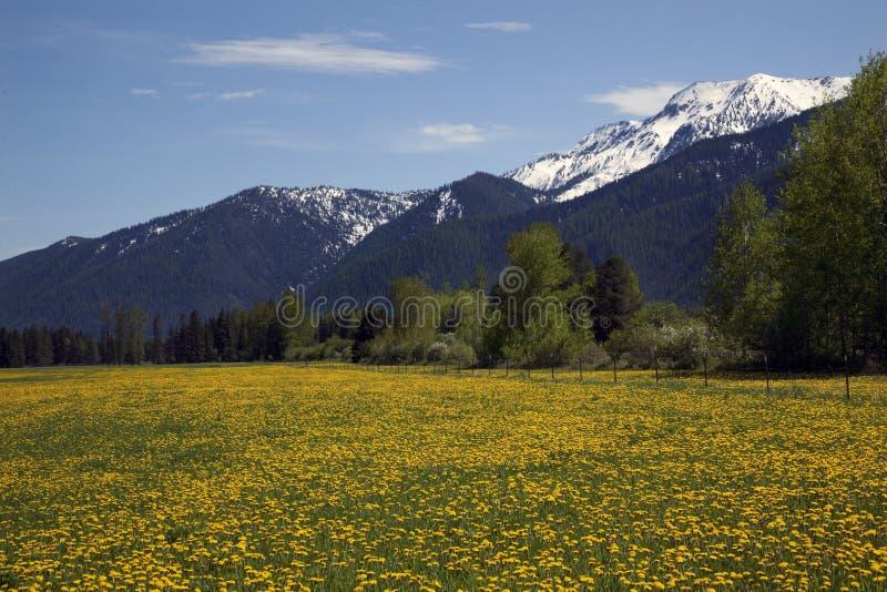 De gele Bergen Montana van de Sneeuw van het Landbouwbedrijf van de Bloem royalty-vrije stock afbeeldingen
