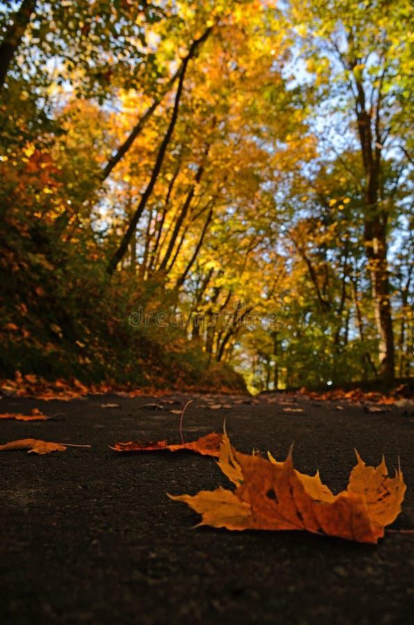 de gele bladeren die van de de herfstesdoorn op de bestrating in Park liggen stock foto's