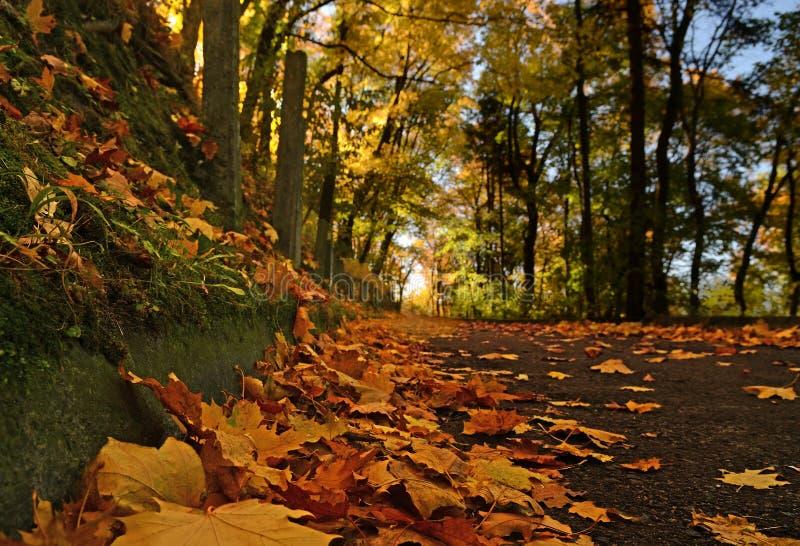 de gele bladeren die van de de herfstesdoorn op de bestrating in Park liggen royalty-vrije stock foto's