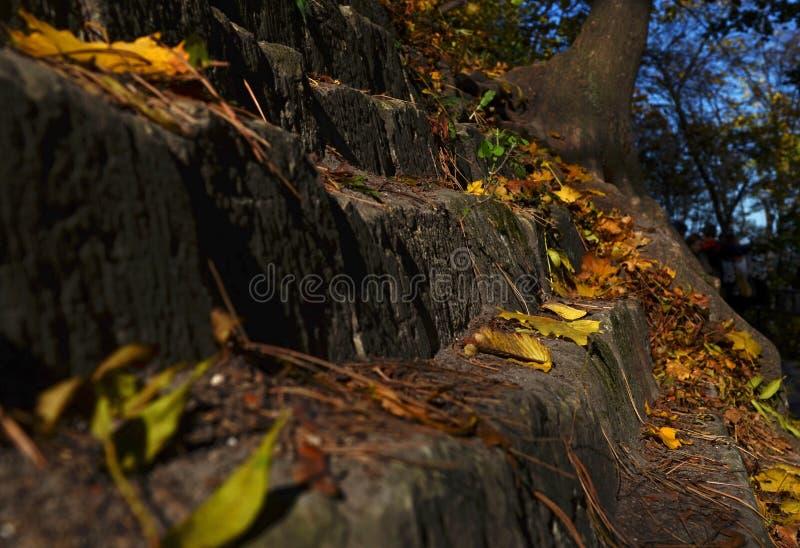de gele bladeren die van de de herfstesdoorn op de bestrating in Park liggen stock afbeelding