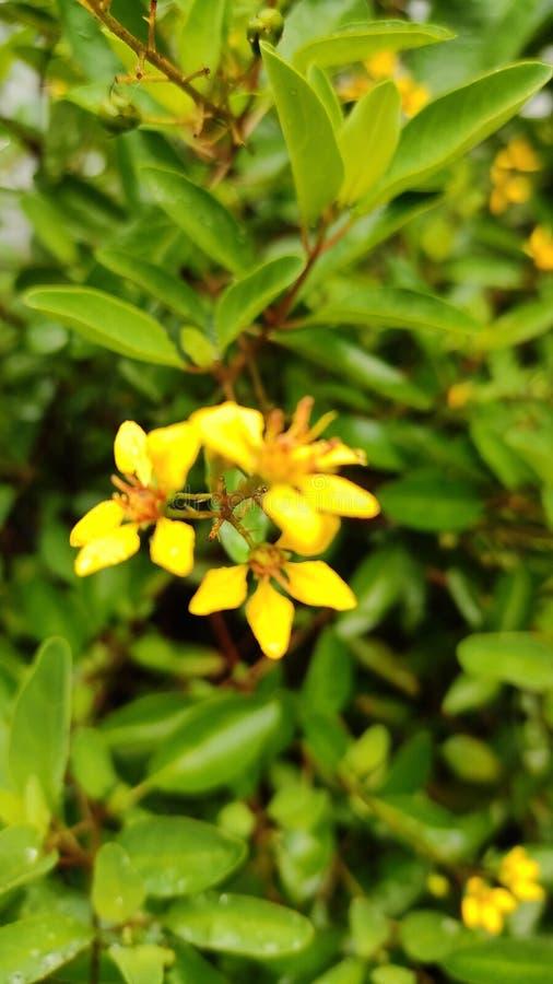 De gele bloemen de magische aard en de bloem is super natuurlijke schoonheid stock fotografie