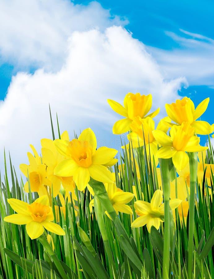 De gele bloemen van de lente stock afbeeldingen