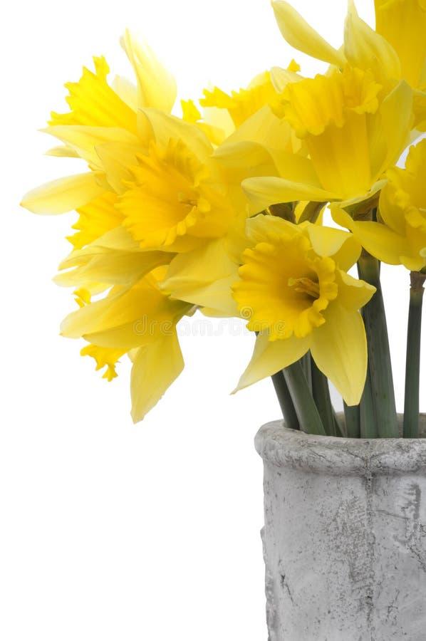 De gele bloemen van Narcissen stock afbeeldingen