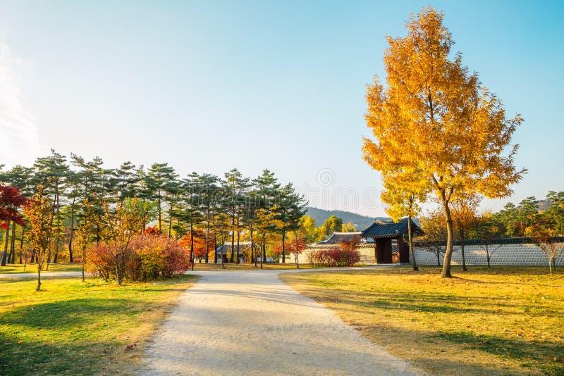 De gele boom van de de herfstesdoorn en plattelandsweg in Gyeongbokgung-paleis, Korea stock afbeelding