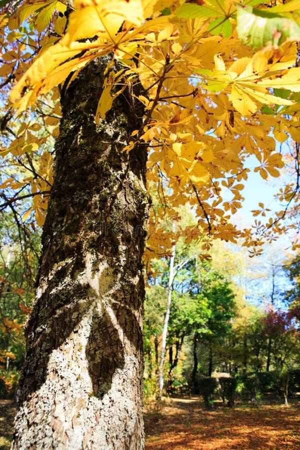 De gele boom van de de herfstesdoorn in het stadspark Autumn Landscape royalty-vrije stock fotografie