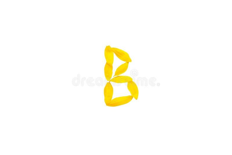 De gele brief B van de jonge doopvonten van zonnebloembloemblaadjes, isoleert Document besnoeiingsbrief B, alfabetelement, decora stock foto