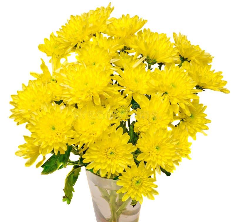 De gele chrysantenbloemen in een transparante vaas, sluiten omhoog witte achtergrond stock foto's