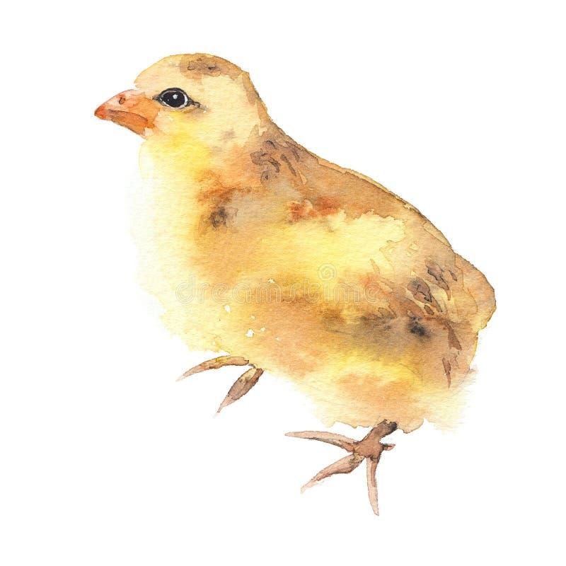 De gele die illustratie van de kippenwaterverf, babykuiken, op wit wordt geïsoleerd stock illustratie
