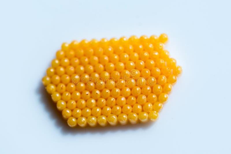 De gele eieren van het kleureninsect op een witte achtergrond stock foto's