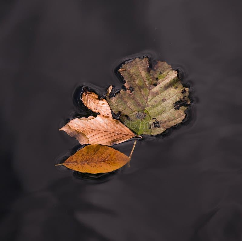 De gele en groene bladeren die van de herfstbomen mooie beelden in aard doen royalty-vrije stock afbeelding