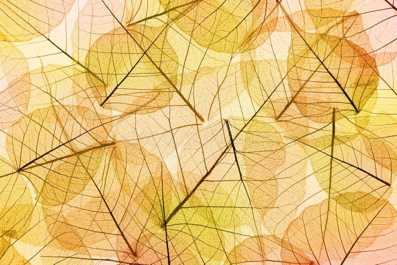De gele en oranje Achtergrond van Autumn Leaves stock afbeelding