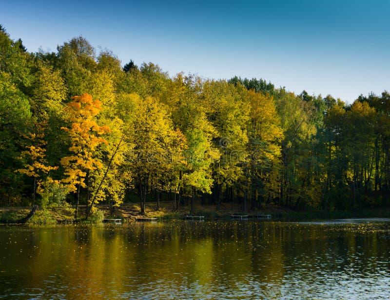 De gele en oranje bomen van de dalingstijd rond de vijver royalty-vrije stock fotografie