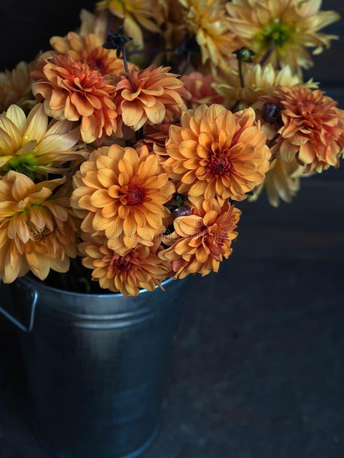 De gele en oranje tuin Dalia bloeit in metaalemmer op een donkere achtergrond stock foto's