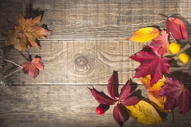 de gele en rode bladeren van de de herfstesdoorn tegen een donkere houten achtergrond Er is vrije ruimte royalty-vrije stock foto's