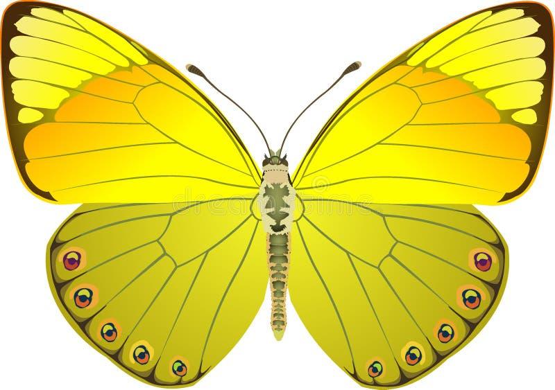 De gele fantasie van de vlinder royalty-vrije illustratie